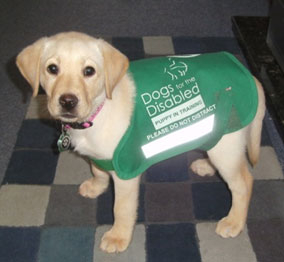 ava-dogs-for-the-disabled-update
