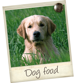 dog-food-tile