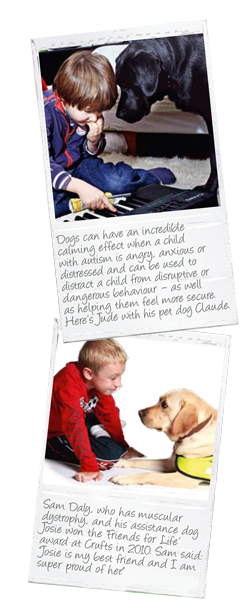 dogs-for-the-disabled2