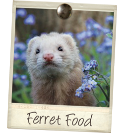 ferret-food-tile