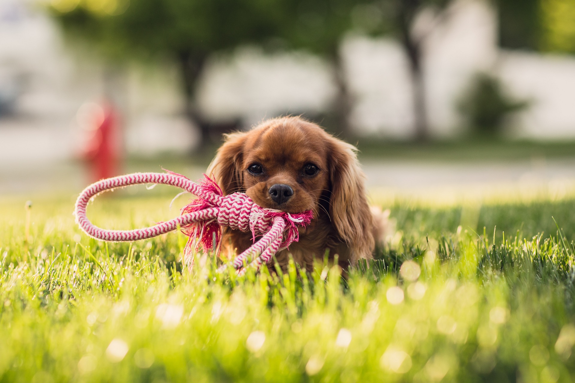 Popular Small and Toy Dog Breeds in the UK