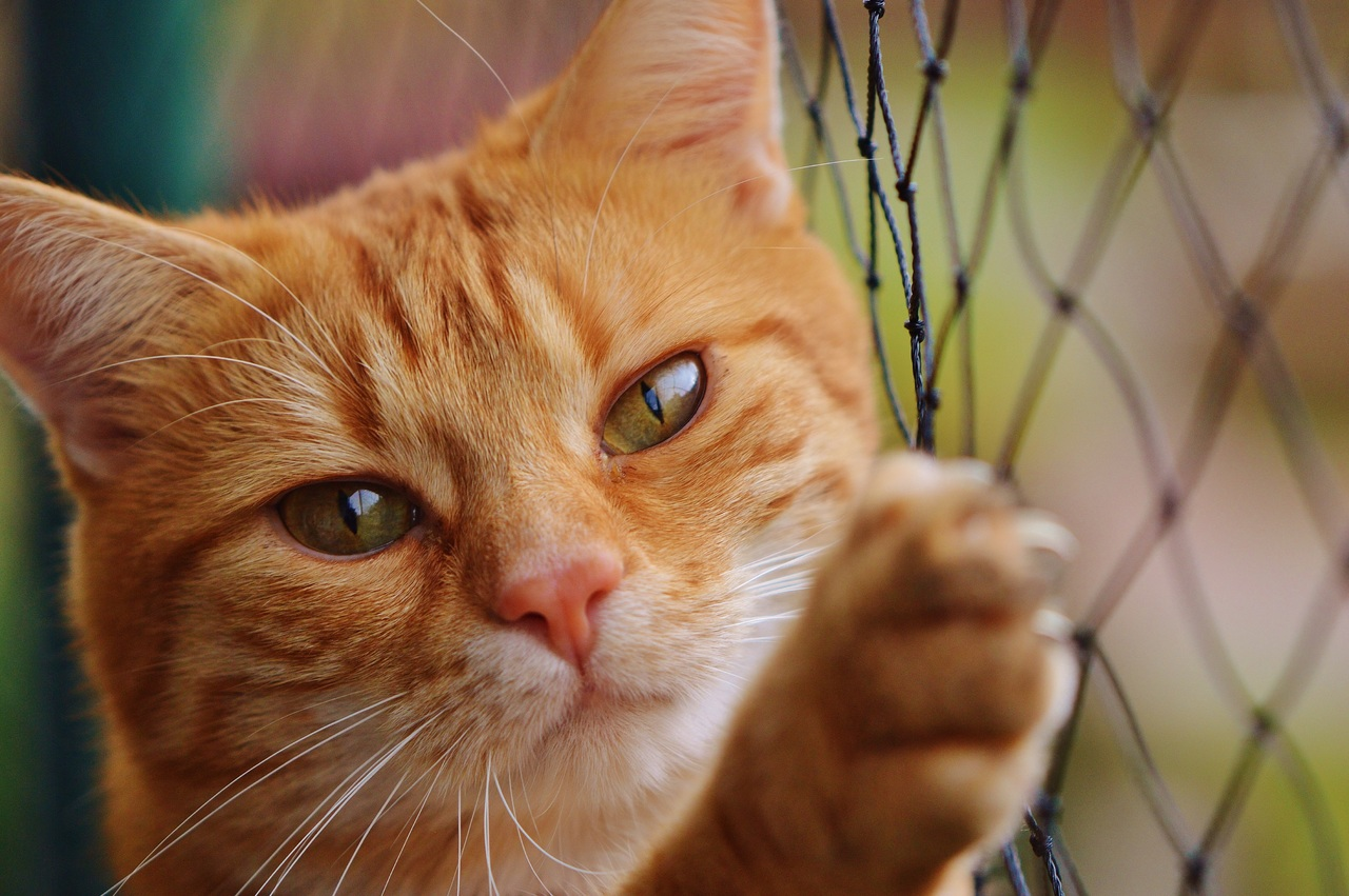 The Signs Of Kidney Failure In Cats James Wellbeloved