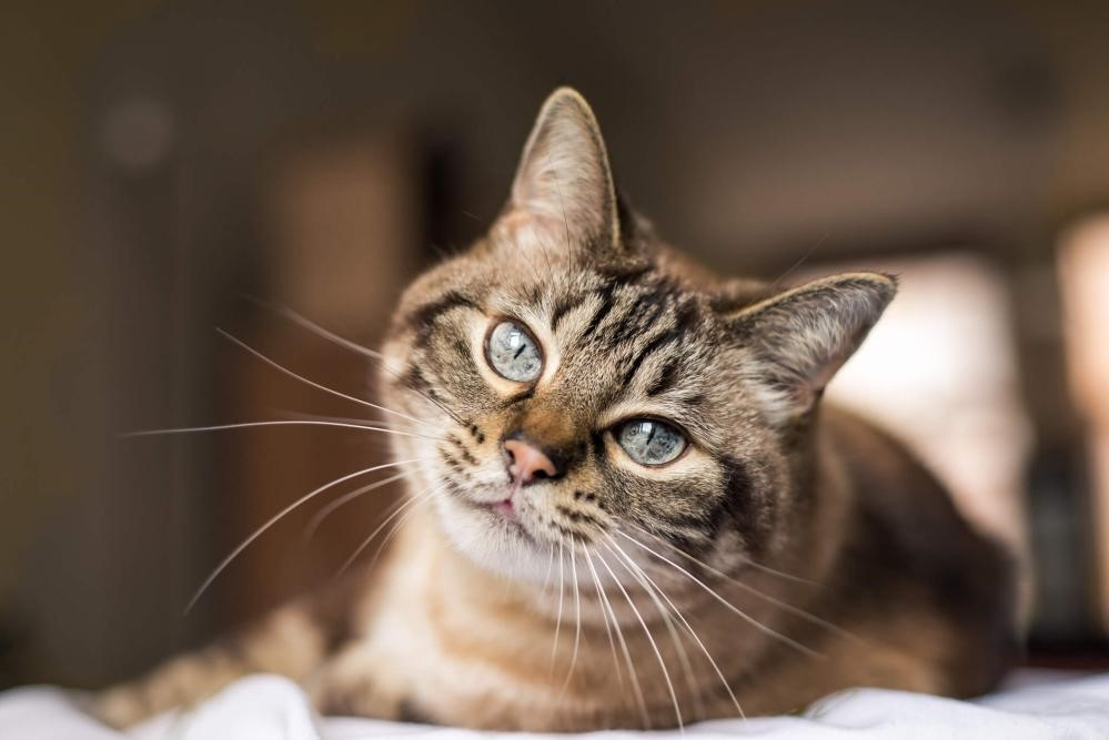 5 common cat allergies and how to prevent them james wellbeloved. Black Bedroom Furniture Sets. Home Design Ideas